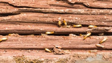 signs that you have termites